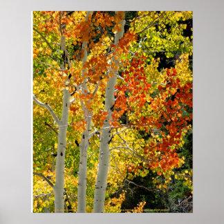 """Mt. Charleston NV Autumn Aspen 16""""x 20"""" Poster"""