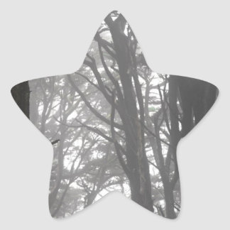 Mt Davidson Trees and Fog Star Sticker