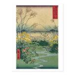 Mt Fuji 31 Post Cards