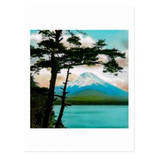 Mt. Fuji Through the Pines Vintage Japanese  富士山 Postcard