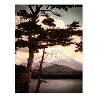 Mt. Fuji Through the Pines Vintage Old Japan Postcard