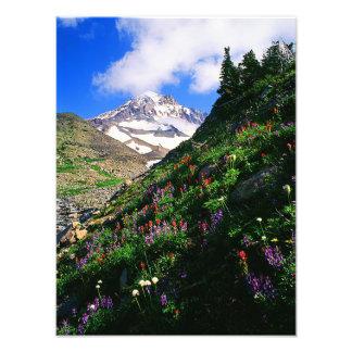 Mt. Hood Wildlflowers Photo Print