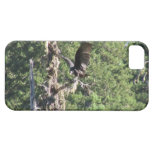 Mt Jefferson Animals Birds Aves Fauna Oregon iPhone 5 Cases