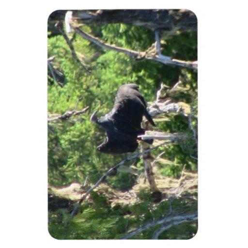 Mt Jefferson Animals Birds Aves Fauna Oregon Magnets