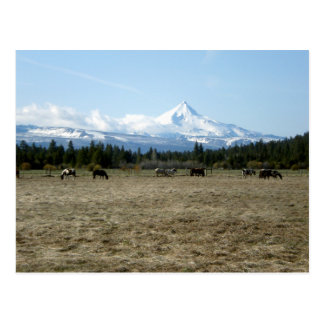 Mt. Jefferson Horses Postcard