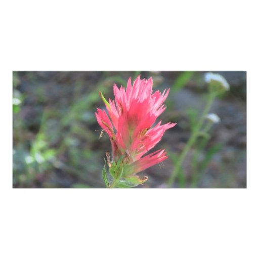 Mt Jefferson Oregon Flora Flower Botany Wildflower Photo Card