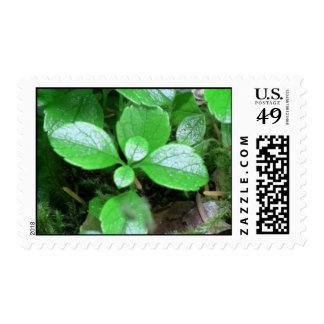 Mt Jefferson Oregon Flora Plants Botany Plantae Stamp