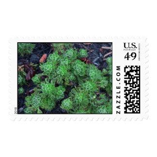 Mt Jefferson Oregon Flora Plants Botany Plantae Postage