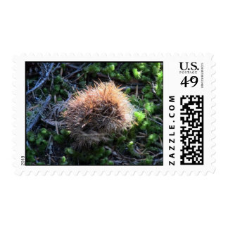 Mt Jefferson Oregon Flora Plants Botany Plantae Postage Stamp