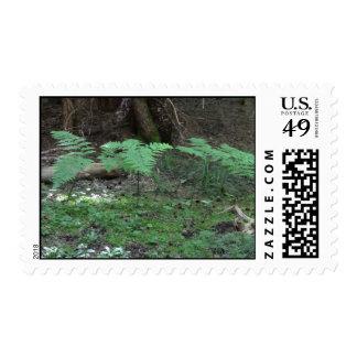 Mt Jefferson Oregon Flora Plants Botany Plantae Postage Stamps
