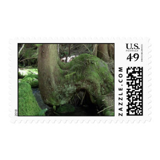 Mt Jefferson Oregon Flora Plants Botany Plantae Stamps