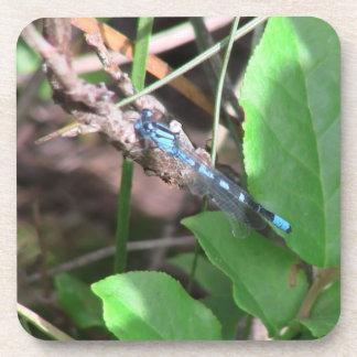 Mt Jefferson Oregon Insects Arachnids Spiders Bug Beverage Coaster