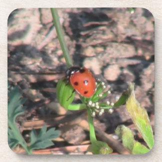 Mt Jefferson Oregon Insects Arachnids Spiders Bug Coaster