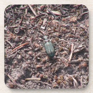 Mt Jefferson Oregon Insects Arachnids Spiders Bug Drink Coaster