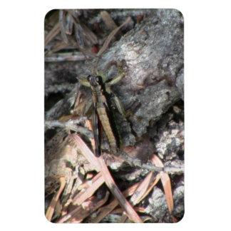 Mt Jefferson Oregon Insects Arachnids Spiders Bug Magnet