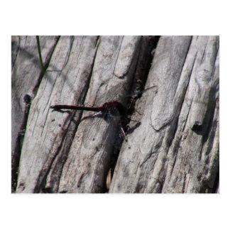 Mt Jefferson Oregon Insects Arachnids Spiders Bug Postcard