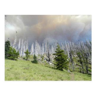 Mt. Jefferson Wilderness Postcard