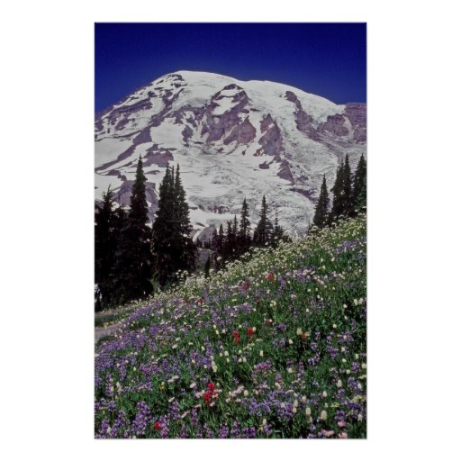 Mt. Rainier from Paradise Park 10 Posters