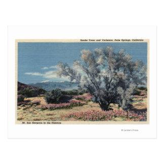 Mt. San Gorgonio View, Smoke Trees Postcard