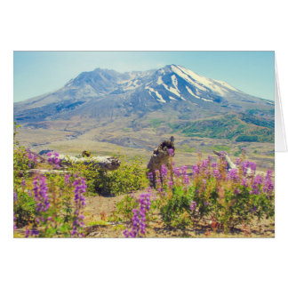 Mt. St. Helens Card