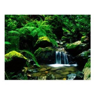 Mt. Tamalpais State Park, CA Postcard