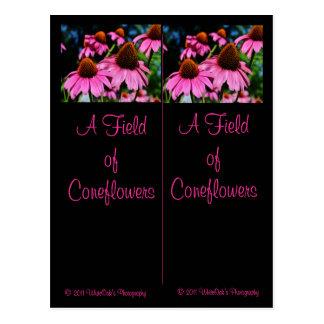 Mucha postal de la señal de Coneflowers