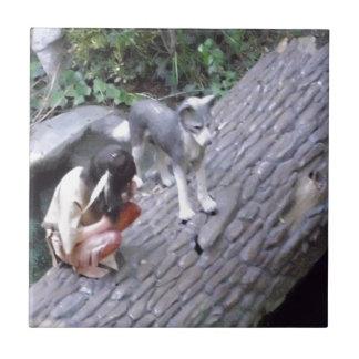 Muchacho indio del nativo americano con el lobo azulejo cuadrado pequeño