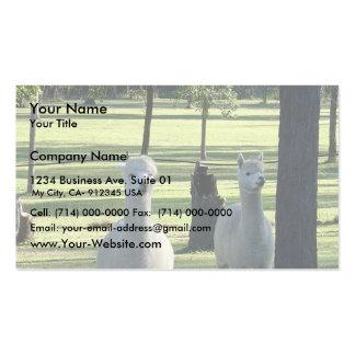 Muchachos blancos lindos de la alpaca en prado tarjetas de visita