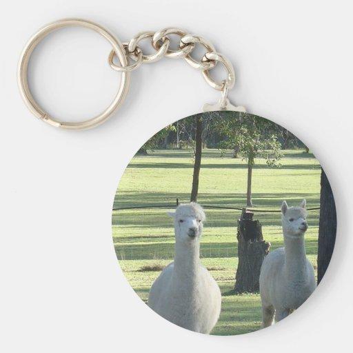 Muchachos blancos lindos de la alpaca en prado ver llavero redondo tipo pin
