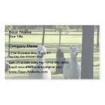 Muchachos blancos lindos de la alpaca en prado ver tarjeta de negocio