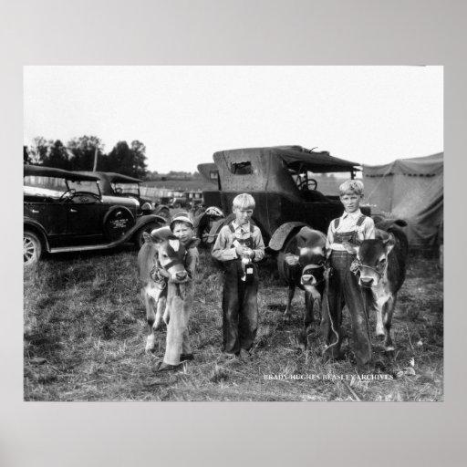 Muchachos de granja con los becerros en el condado posters