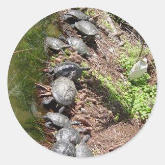 Muchas tortugas etiqueta redonda