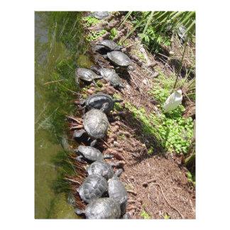 Muchas tortugas flyer personalizado
