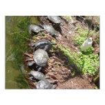 Muchas tortugas invitación 10,8 x 13,9 cm