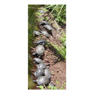 Muchas tortugas lona