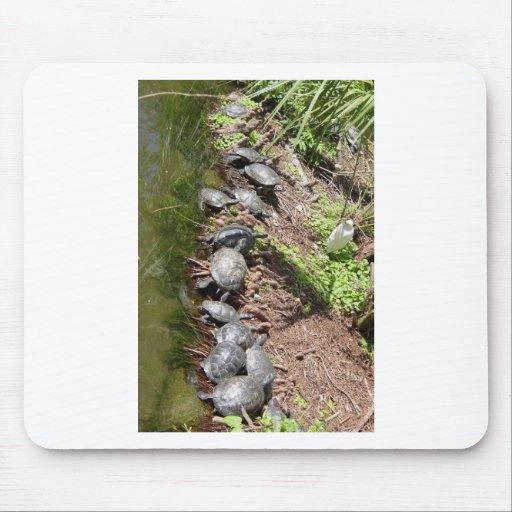 Muchas tortugas tapetes de ratones