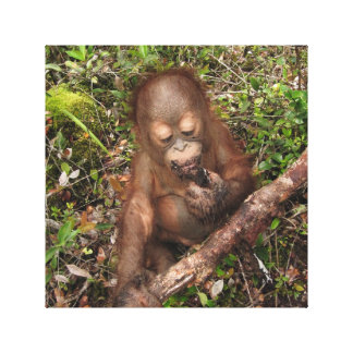 Mud Pie Picnic Orangutan George Baru Canvas Print