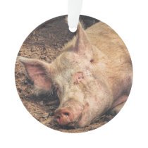 Mud Pig Ornament