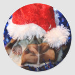 Mud turtle with head covered in santa hat round stickers