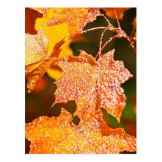 muddled maple leaves in autumn postcard