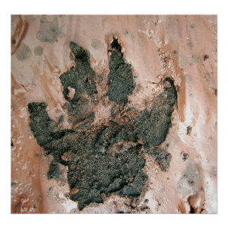 Muddy Dog Print 2 Poster