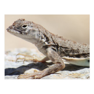 Muddy Lizard Postcard