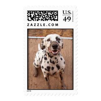 Muddy Mutt Postage Stamp