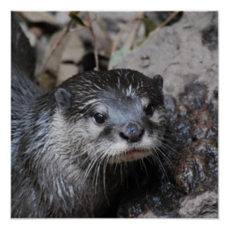 Muddy Otter Poster
