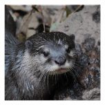 Muddy Otter Posters