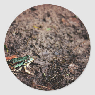 Muddy Themed, A Green Frog Sitting On A Muddy Grou Classic Round Sticker