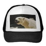 Mueca del oso polar gorros bordados