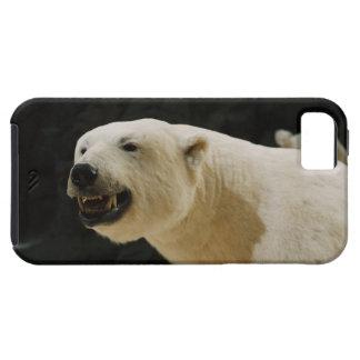 Mueca del oso polar iPhone 5 carcasa