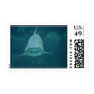 Mueca del tiburón