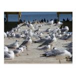 Muelle del pájaro postales